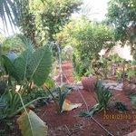 Lush and fragrant garden