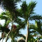 пальмочки