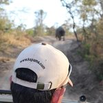 Following the rhino for a while