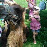 Voulez-vous brosser un chameau?