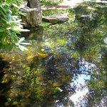 Ботанический сад Гетеборга
