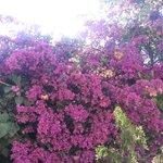 meravigliosi fiori che colorano l'ambiente