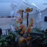 Vista lago con orchidee
