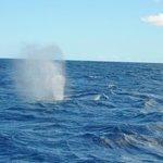Avvistamento di una balenottera comune