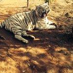 Jugomaro Predator Park