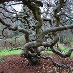 Beautiful trees to enjoy