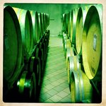 private tour of the vineyard and cellars