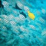 Snorkeling in Makena