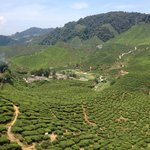 We walked to the tea plantations from our home stay