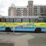 Our water bus - Henrietta Hippo