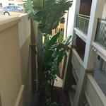 Large decorative tree along walkway