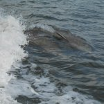 Dolphins playing in our wake.