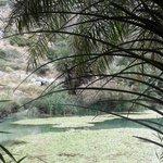 Il Palmeto Di Preveli Palm Beach 5