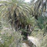Il Palmeto Di Preveli Palm Beach 4