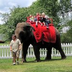 Elephant rides available