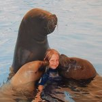 swimming with sealions