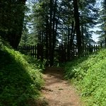Nature trail through the mountains and pine forest