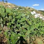 Cactusplants on the hill