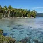 Vahine Island et son jardin de corail