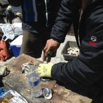 Using glove to shuck. See gray bin in back to collect shells only