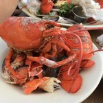 My lobster - after