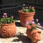Nice flowers and gardens