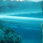 vista do toboga que visualiza os golfinhos