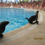 Морские котики в дельфинарии