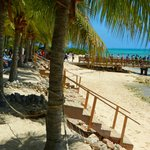 Palms near the beach