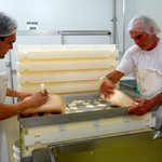watch cheese making