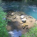 Hiking along side the Metolious River