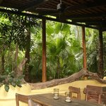 Eating Area in the Jungle