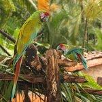 Birds at Las Caletas Beach