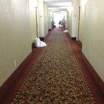 Dirty Hallway #1