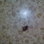 comiendosela las hormigas