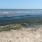Море или болото?