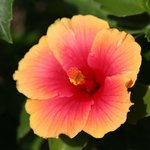 beautiful flowers were everywhere