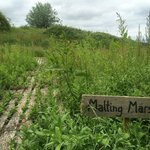 Malting Marsh for pond dipping
