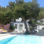 Pool with pine tree