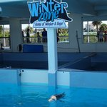 Winter the dolphin in her area.