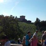 Vineyard from terrace