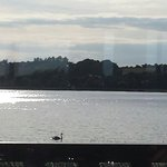 Excuse the sun reflection but the swan on the lake had to be photographed!