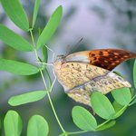 Butterfly on twig