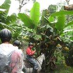 Banana plantation with Enrique!
