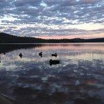 Ducks on on the lake