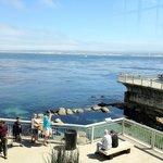 Outdoor view of the Open Ocean exhibit