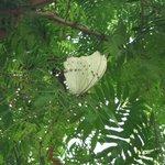 Butterflies everywhere!!