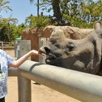 i got to feed and touch a rhino!