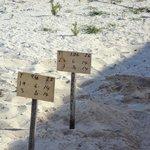 Playa (área de tortugas)