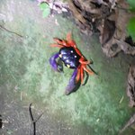 halloween crabs all over place on grounds